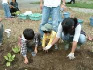 ハクサイの苗を植えてから、ハクサイとダイコンの種を蒔きました