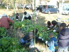 今日の作業は除草と観察 そして収穫